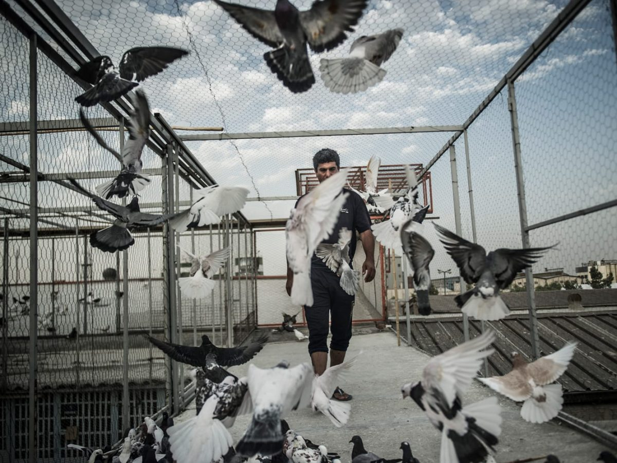 pigeon Keepers