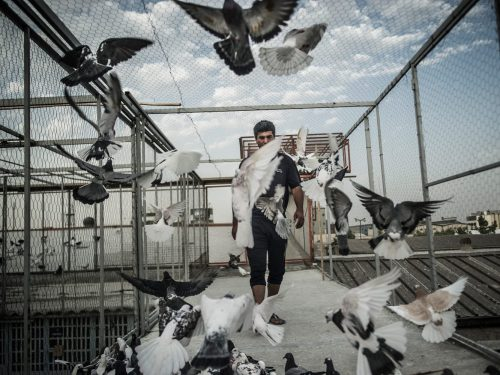 pigeon Keepers