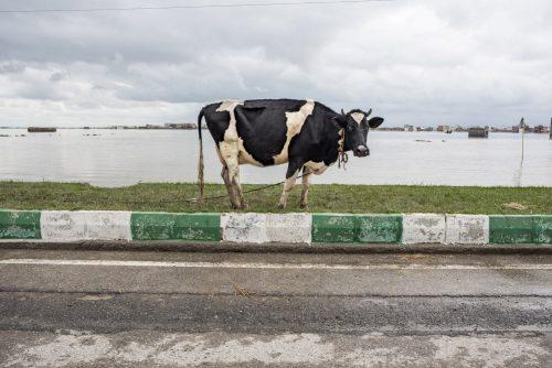 Iran Flash-Flood- (Extended)