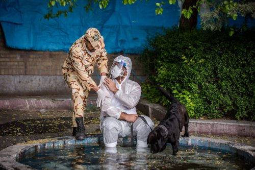 Iranian COVID Sniffer Dogs – (Extended)