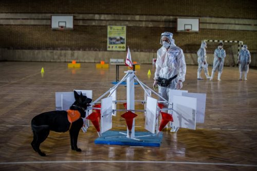 Iranian COVID Sniffer Dogs